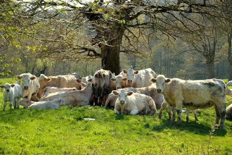 Ferienhaus La Vieille (59125), Dun sur Grandry, Nièvre, Burgund, Frankreich, Bild 31