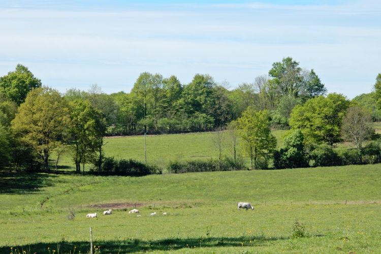 Ferienhaus La Vieille (59125), Dun sur Grandry, Nièvre, Burgund, Frankreich, Bild 35