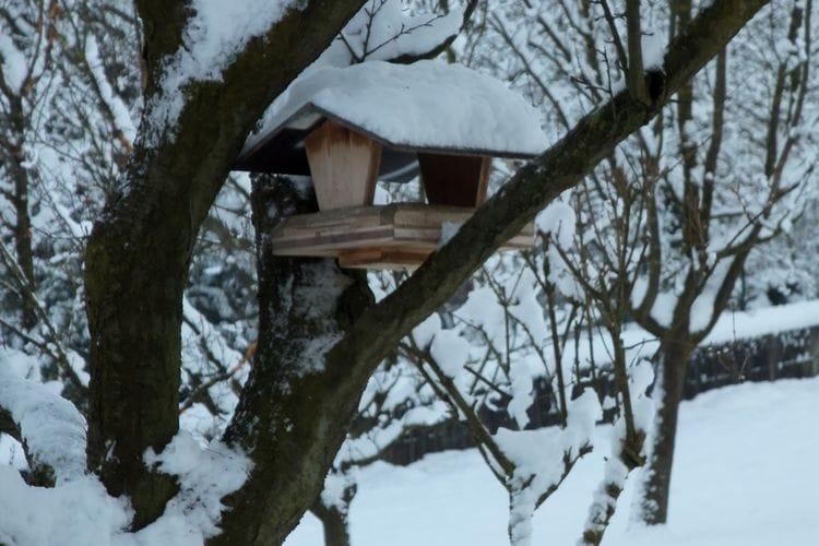 Ferienhaus Au Cheval Blanc (60419), Ruederbach, Oberelsass, Elsass, Frankreich, Bild 32