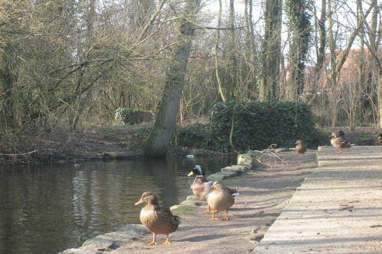 Ferienwohnung Biaritz (60542), Bredene, Westflandern, Flandern, Belgien, Bild 22