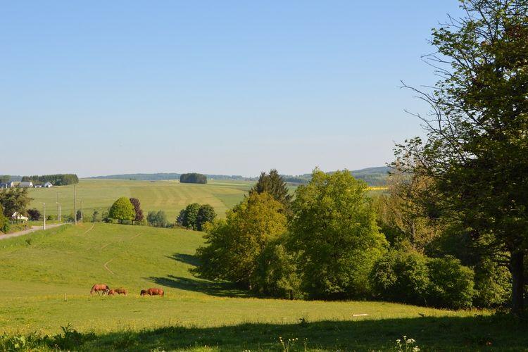 Ferienhaus La Hetraie (60109), Roumont, Luxemburg (BE), Wallonien, Belgien, Bild 24