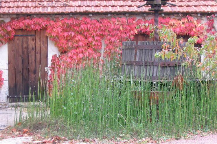 Ferienhaus La Cartaudiere (59485), Charnizay, Indre-et-Loire, Centre - Val de Loire, Frankreich, Bild 15