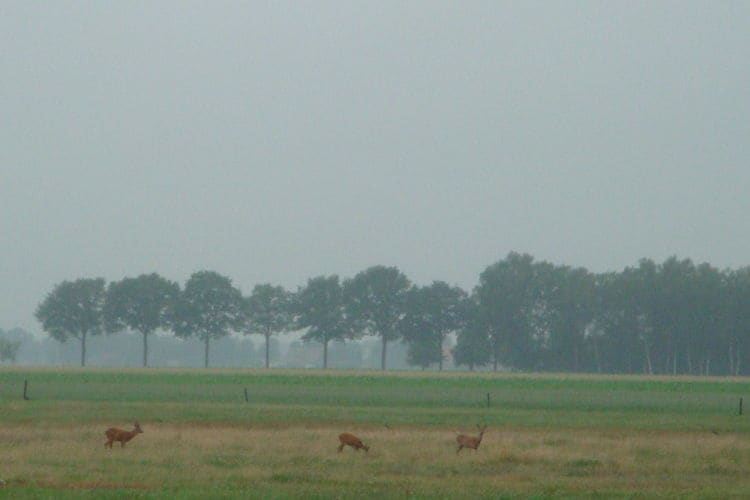 Ferienhaus Buitenplaats Berg en Bos 12 (61503), Lemele, Salland, Overijssel, Niederlande, Bild 20