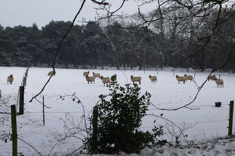 Ferienhaus Buitenplaats Berg en Bos 12 (61503), Lemele, Salland, Overijssel, Niederlande, Bild 26