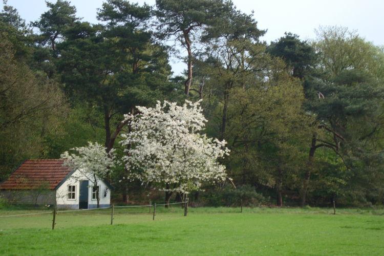 Maison de vacances Buitenplaats Berg en Bos (61499), Lemele, , Overijssel, Pays-Bas, image 32