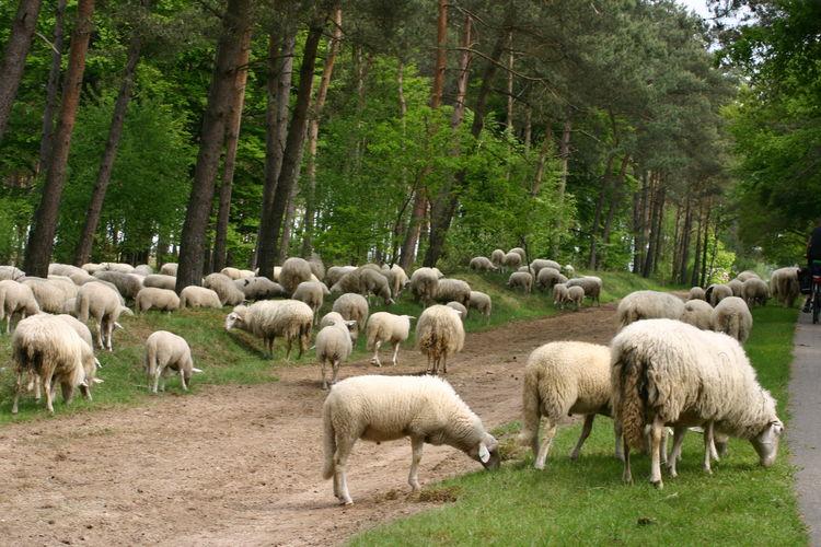 Maison de vacances Buitenplaats Berg en Bos (61508), Lemele, , Overijssel, Pays-Bas, image 27