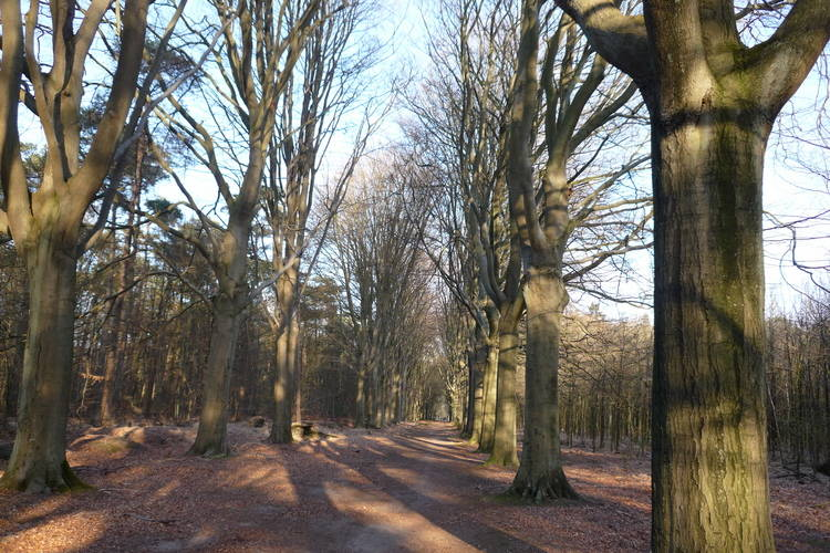 Ferienhaus Landgoed Wouwse Plantage (59175), Wouwse Plantage, , Nordbrabant, Niederlande, Bild 27