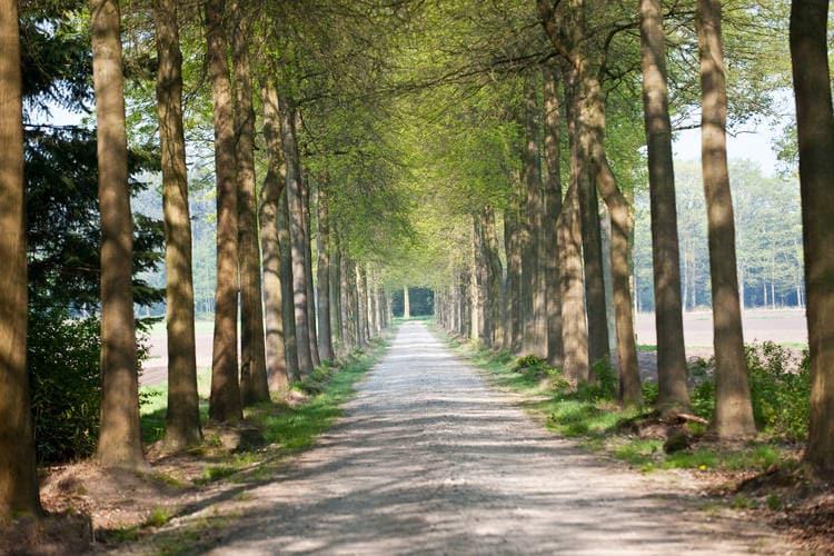 Ferienhaus Landgoed Wouwse Plantage (59175), Wouwse Plantage, , Nordbrabant, Niederlande, Bild 26