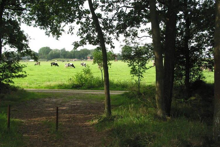 Ferienhaus Vakantiepark Herperduin 9 (65693), Herpen, , Nordbrabant, Niederlande, Bild 20