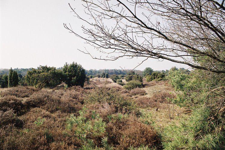 Ferienhaus Buitenplaats Berg en Bos 23 (61506), Lemele, Salland, Overijssel, Niederlande, Bild 34