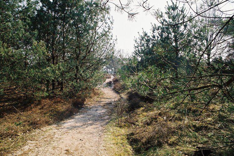 Ferienhaus Buitenplaats Berg en Bos 23 (61506), Lemele, Salland, Overijssel, Niederlande, Bild 35