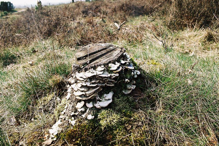 Ferienhaus Buitenplaats Berg en Bos 23 (61506), Lemele, Salland, Overijssel, Niederlande, Bild 33