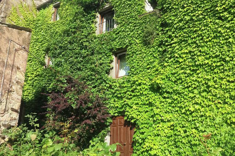 Ferienwohnung Casa Verde (65943), Celleno, Viterbo, Latium, Italien, Bild 11
