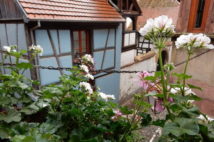 Ferienwohnung La Stub (302845), Riquewihr, Oberelsass, Elsass, Frankreich, Bild 21