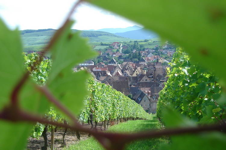 Ferienwohnung La Kuch (302804), Riquewihr, Oberelsass, Elsass, Frankreich, Bild 32