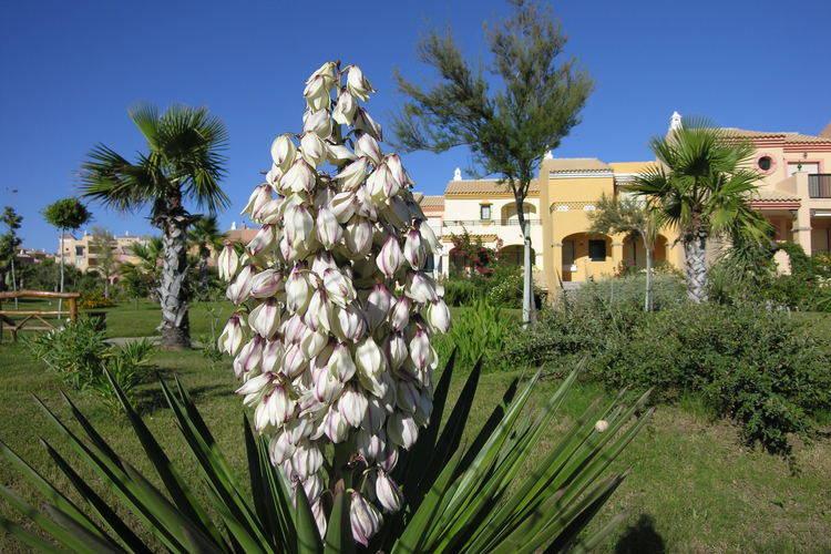Ferienhaus La Casa Azúl (76877), Zahara de los Atunes, Costa de la Luz, Andalusien, Spanien, Bild 21