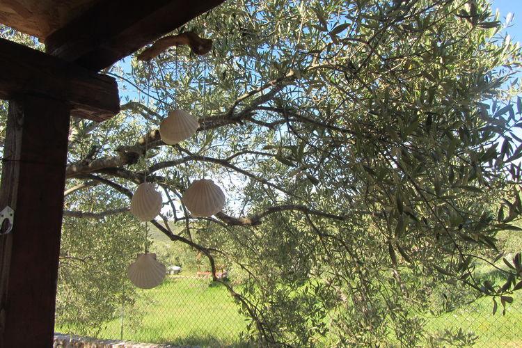 Ferienhaus House Olive Tree (77030), Pasman, Insel Pasman, Dalmatien, Kroatien, Bild 38