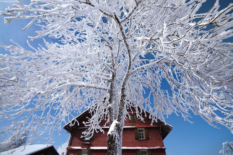 vakantiehuis Zwitserland, Bern, Kandergrund vakantiehuis CH-3716-02