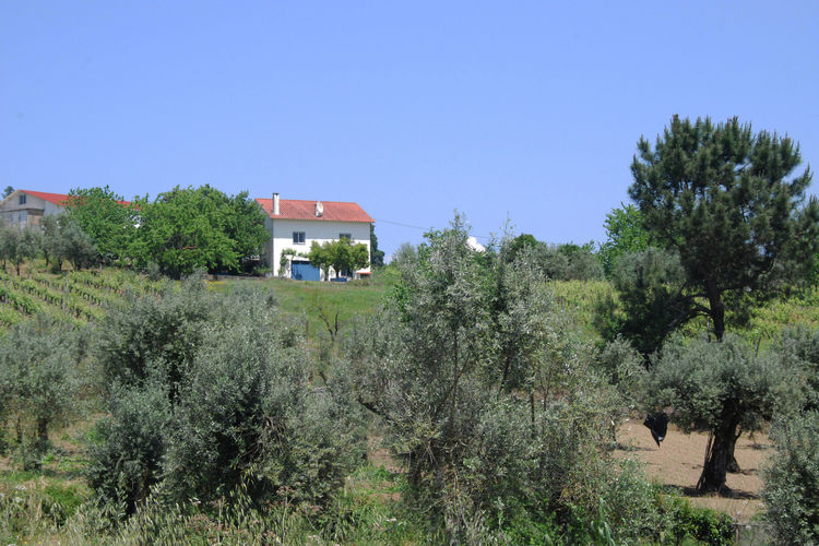 Ferienhaus Casa do Sonho (101207), Beco, Costa Verde (PT), Nord-Portugal, Portugal, Bild 2