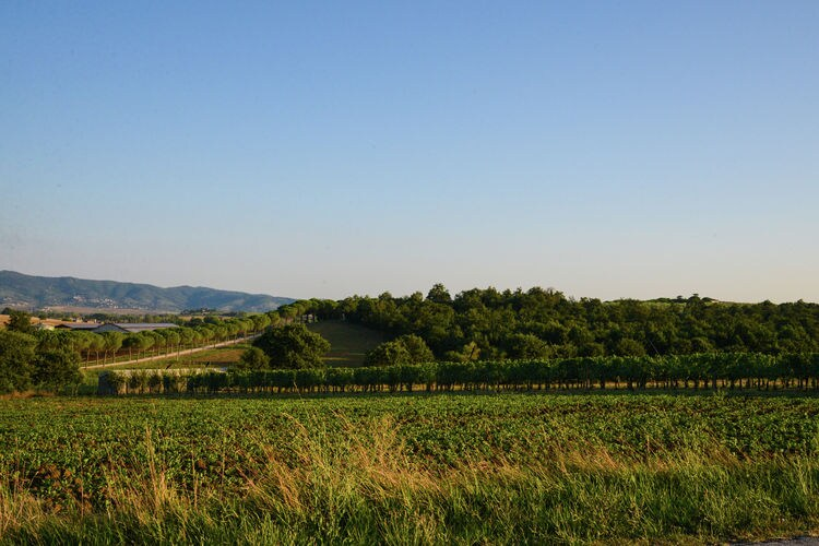 Ferienwohnung Po' di Ciuccio (256496), Castiglione del Lago, Perugia, Umbrien, Italien, Bild 35