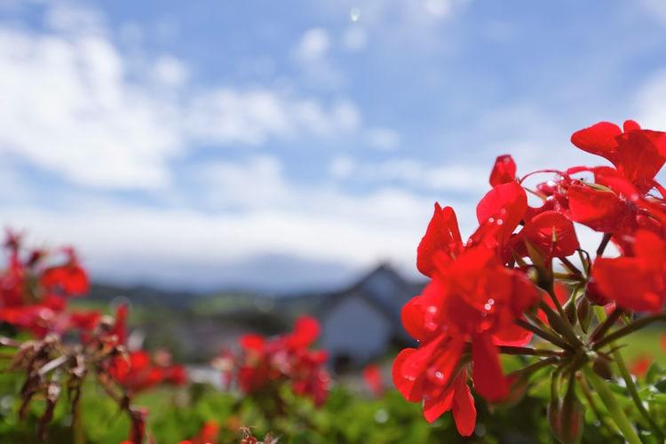 Ferienwohnung Rose (122385), Bolsdorf, Vulkaneifel, Rheinland-Pfalz, Deutschland, Bild 28