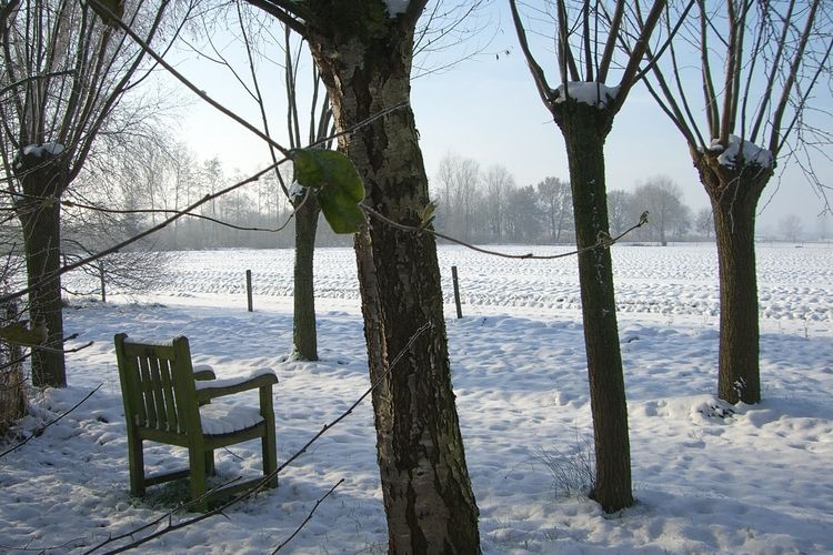 Tuin (winter)
