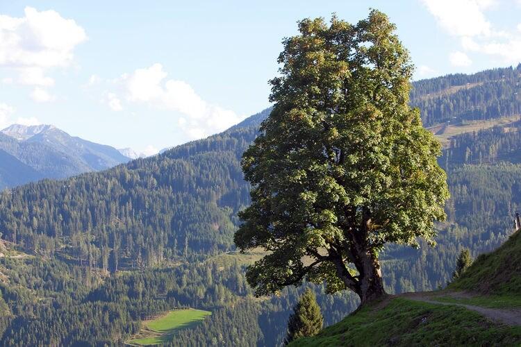 Ferienwohnung Bucher (253599), Wagrain, Pongau, Salzburg, Österreich, Bild 19
