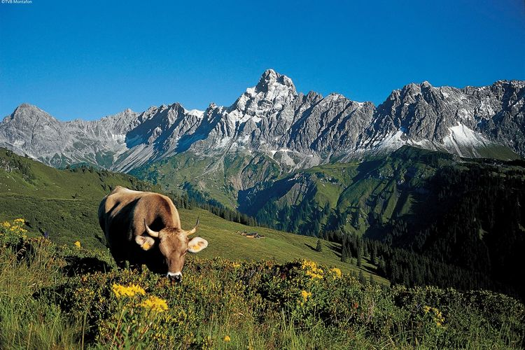 Ferienwohnung Irene (254038), Vandans, Montafon, Vorarlberg, Österreich, Bild 22