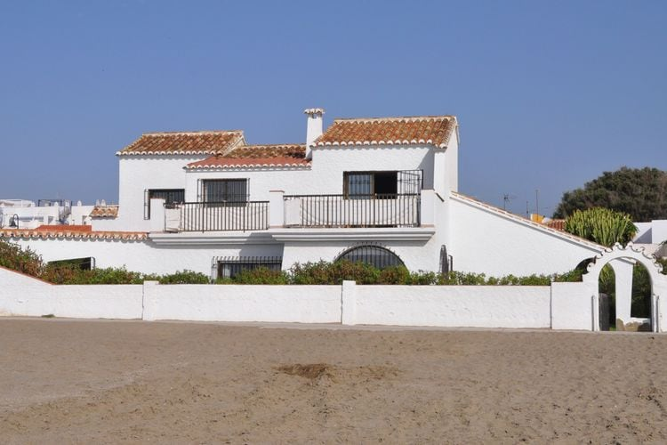 Gaviota  Costa del Sol Spain