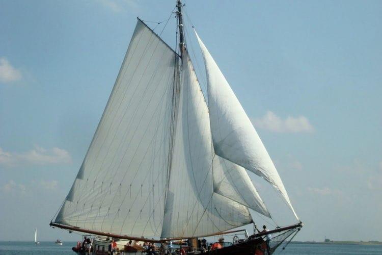 Boat Zealand