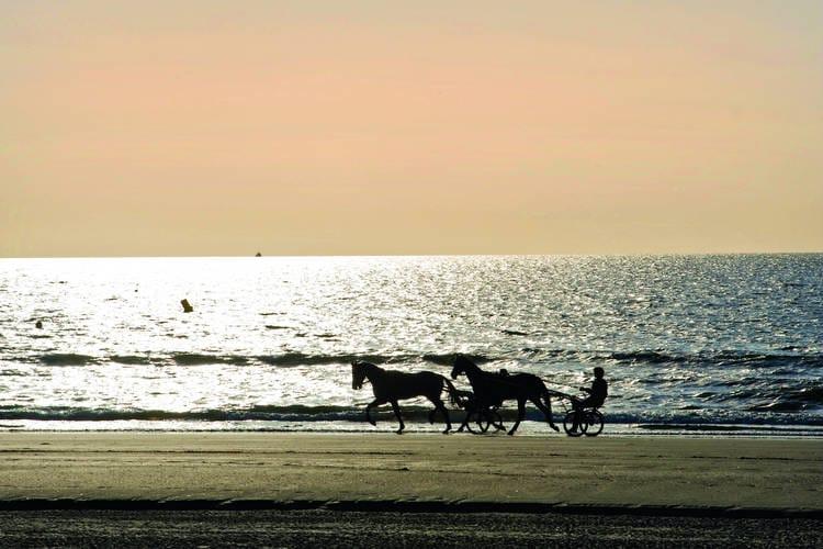 Ferienwohnung La Residence du Golf 2 (225773), Deauville, Calvados, Normandie, Frankreich, Bild 26
