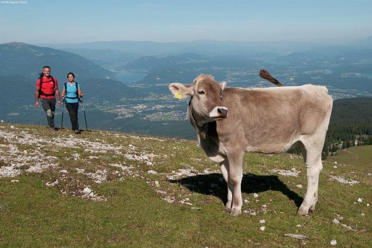 Ferienwohnung Hollinger (226911), Afritz am See, Villach-Land, Kärnten, Österreich, Bild 24