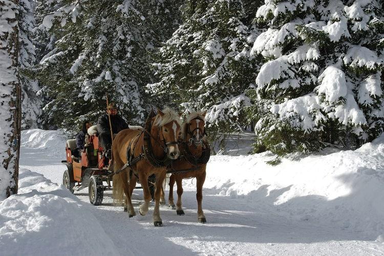 Ferienwohnung Schöpf (236416), Seefeld in Tirol, Seefeld, Tirol, Österreich, Bild 24