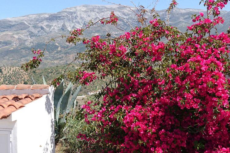 Ferienhaus Villa Bandoleros (239334), Arenas, Costa del Sol, Andalusien, Spanien, Bild 2