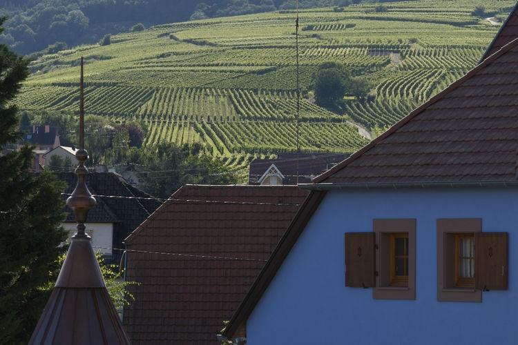 Ferienwohnung Le Clos d'Eguisheim (247994), Eguisheim, Oberelsass, Elsass, Frankreich, Bild 15