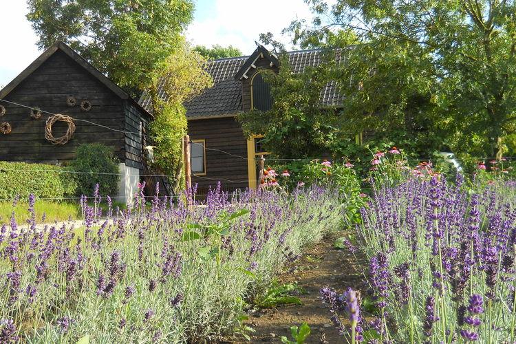 Vakantiehuizen Nederland | Gelderland | Vakantiehuis te huur in Deil   met wifi 4 personen