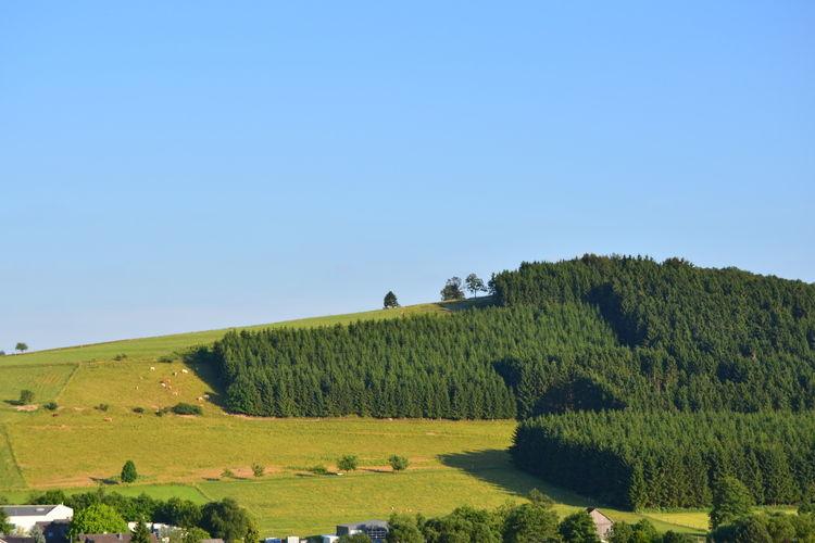 Ferienwohnung Freiblick (300426), Grevenstein, Sauerland, Nordrhein-Westfalen, Deutschland, Bild 21