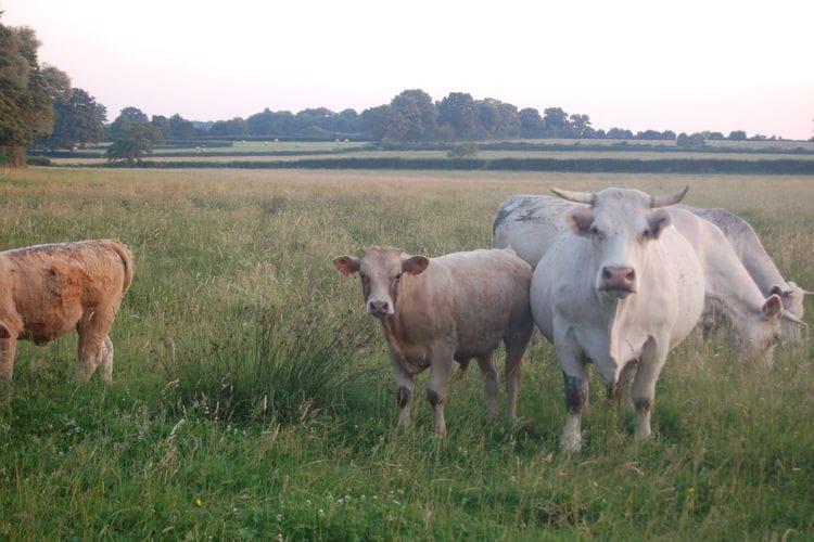 Ferienhaus Fermette Maux (308054), Maux, Nièvre, Burgund, Frankreich, Bild 32