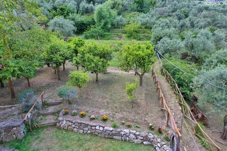 Ferienwohnung Gli Ulivi 2 (307472), Sant'Agnello, Amalfiküste, Kampanien, Italien, Bild 19