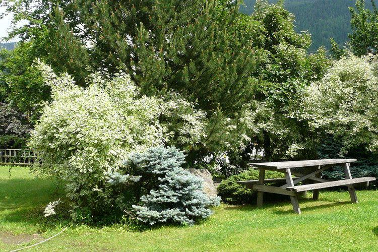 Ferienwohnung Dario Uno (311909), Male', Trentino, Trentino-Südtirol, Italien, Bild 25