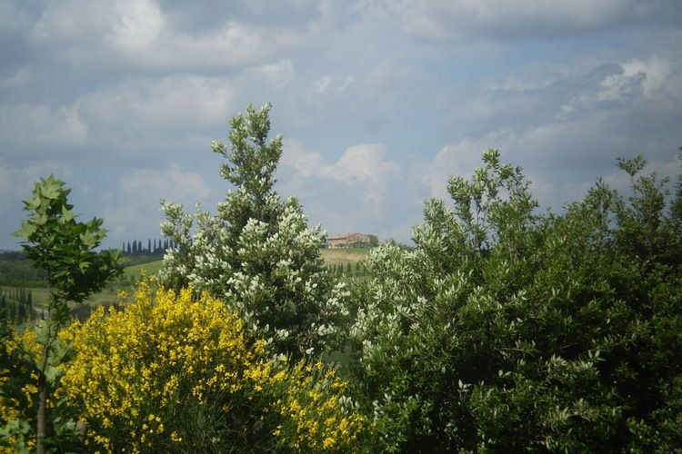Ferienwohnung Forno (311912), Castelnuovo Berardenga, Florenz - Chianti - Mugello, Toskana, Italien, Bild 38