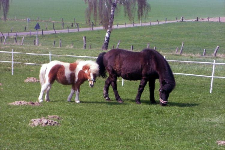 Ferienwohnung Am Ferienhof (317147), Trendelburg, Nordhessen, Hessen, Deutschland, Bild 23