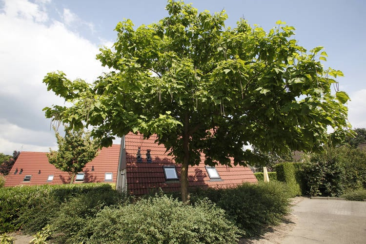 Ferienhaus Vakantie bij Meeussen 2 (1683797), Plasmolen, Noord-Limburg, Limburg (NL), Niederlande, Bild 3