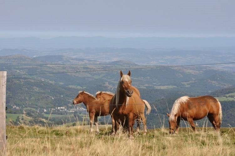 Ferienhaus Vakantie woning - 2 (340820), Montaigut en Combraille, Puy-de-Dôme, Auvergne, Frankreich, Bild 31
