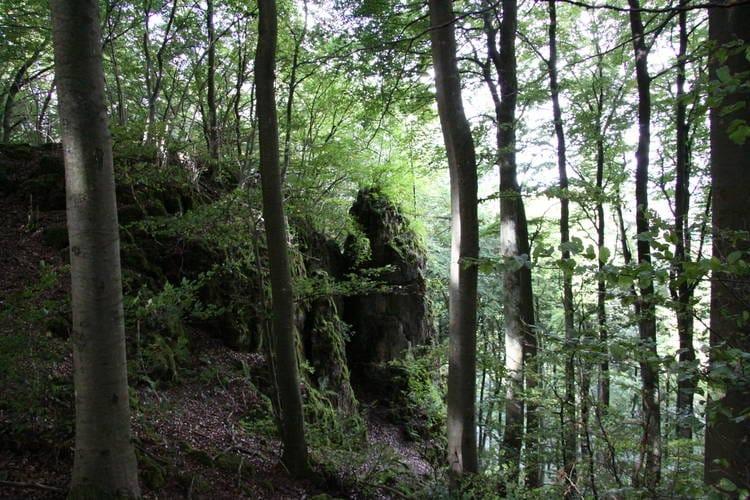 Ferienhaus Eifelstate (338527), Gerolstein, Vulkaneifel, Rheinland-Pfalz, Deutschland, Bild 17