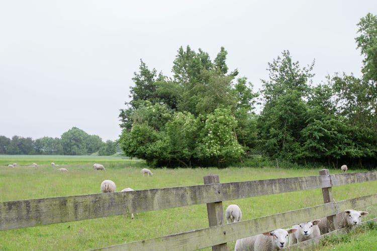Boerderij Nederland, Friesland, Molkwerum Boerderij NL-8722-07