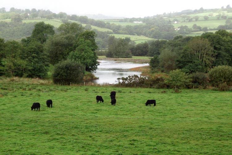 Ferienwohnung Cwmgwyn Farm (346126), Llandovery, West Wales, Wales, Grossbritannien, Bild 8