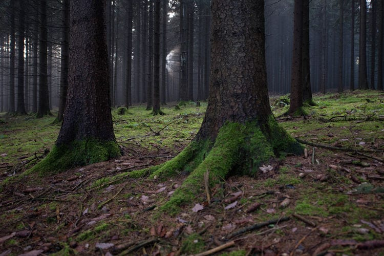 Ferienwohnung Im Erzgebirge (392671), Pockau, Erzgebirge, Sachsen, Deutschland, Bild 22