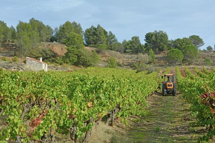 Ferienhaus La Bastide (404046), Villelongue d'Aude, Aude Binnenland, Languedoc-Roussillon, Frankreich, Bild 36