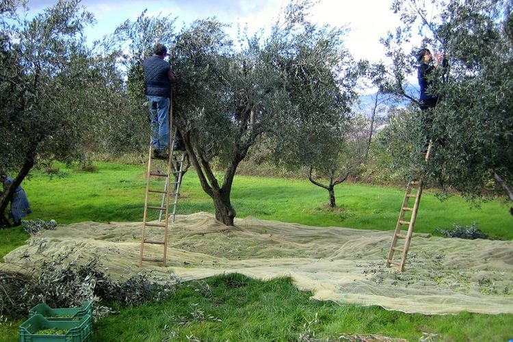 Ferienwohnung Gli Ulivi (398558), Abbateggio, Pescara, Abruzzen, Italien, Bild 38